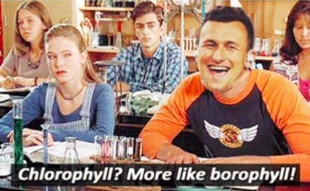 johnny_chlorophyll